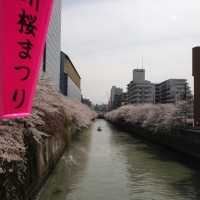 目黒川IMG_2650