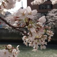 目黒川IMG_8874